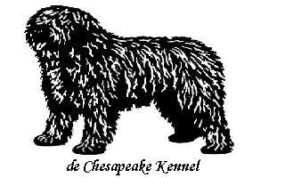 Spanish Water Dog History